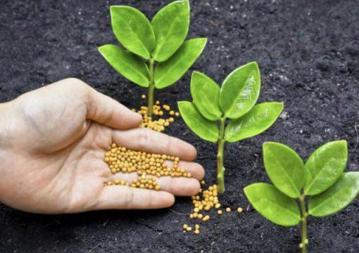 ¿Fertilizantes líquidos o sólidos?