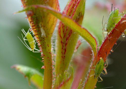 Las 10 Plagas más comunes en tu Huerto Agrícola
